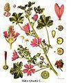 Remedios caseros para los forúnculos