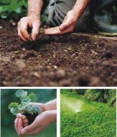 Siembra de jardín