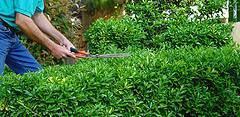 Ejercicio en el jardín
