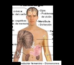 Ejercicios para la fibromialgia
