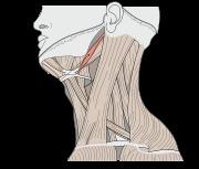 Ejercicios para eliminar el dolor de cuello