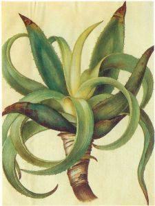 Aloe vera para el tratamiento de la psoriasis en el cuero cabelludo