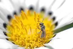 Propiedades del polen