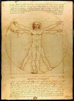 Proporciones del cuerpo humano