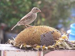 Propiedades de las semillas para curar la caspa