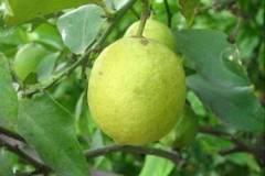 Enjuague de limón para aclarar el pelo