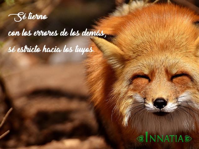 Amol De Foto Con Frase: Imágenes De Animales Con Frases Graciosas, Tiernas, De