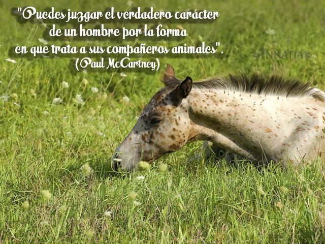 Frases De Animales Y Contra El Maltrato Animal Frases