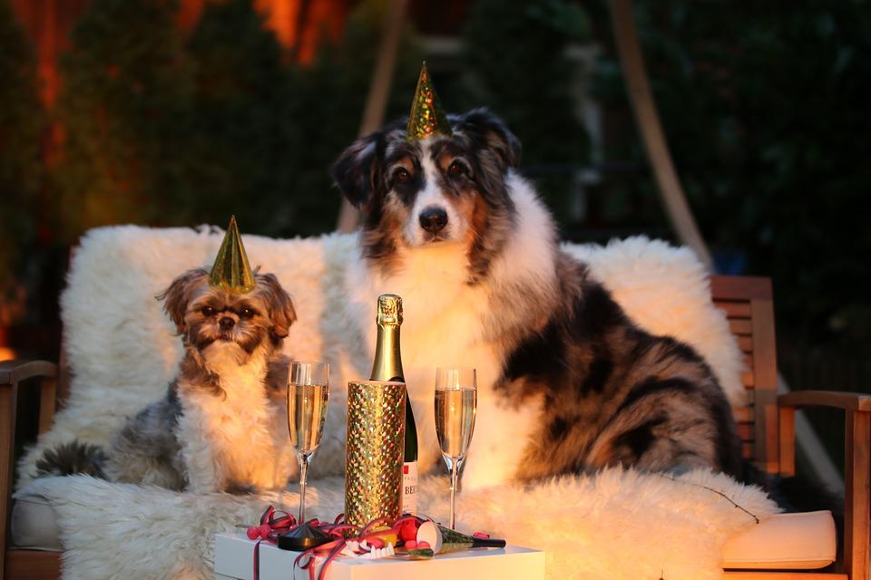 Frases De Año Nuevo Cortas Para Felicitar A Tu Amor Amigos