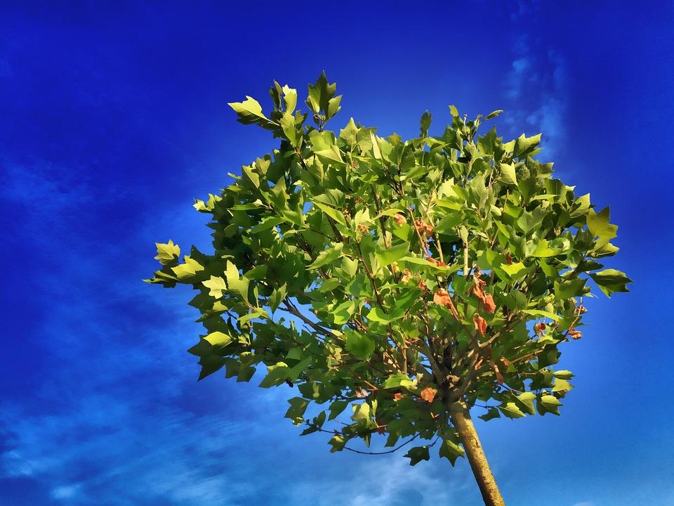 Frases De árboles Los árboles Aliados De La Vida