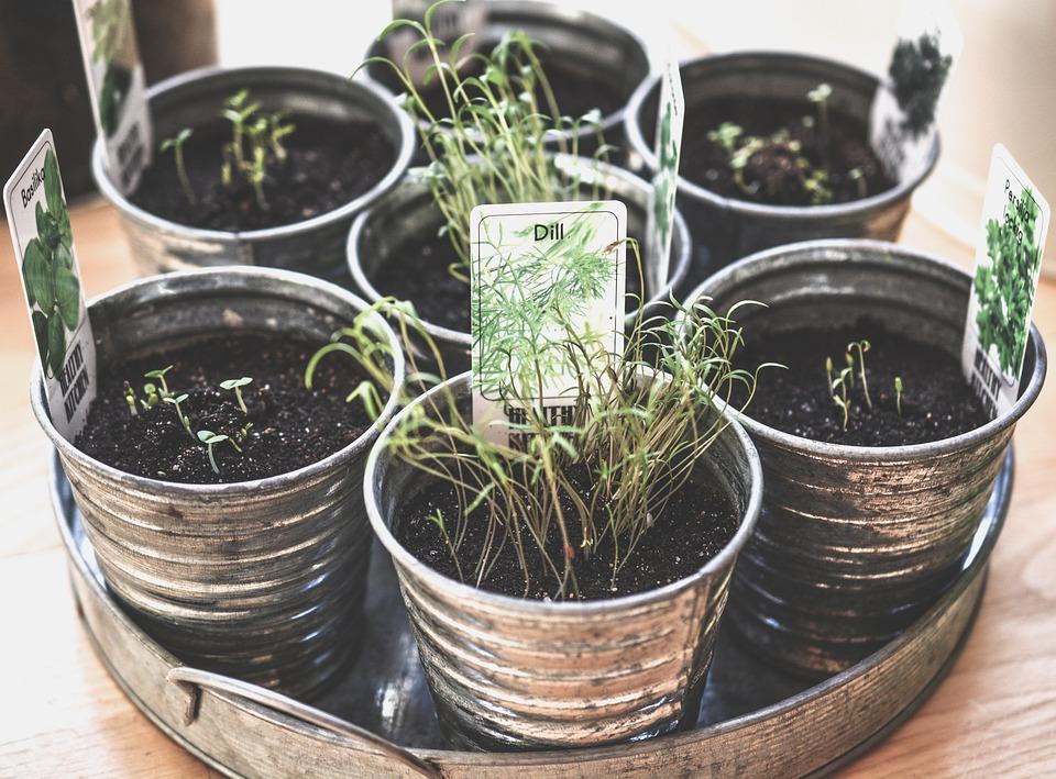 para qué sirve cultivar hierbas aromáticas en casa - innatia