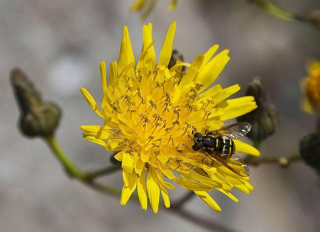 C mo ahuyentar avispas del jard n 5 plantas para - Plantas para ahuyentar insectos ...