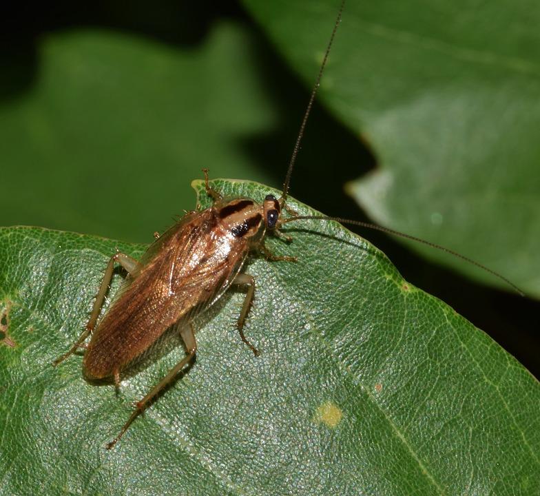 Remedios Contra Las Cucarachas Trucos Caseros Para Eliminar Las Cucarachas
