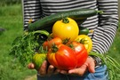 Siembra de hortalizas