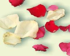 Pétalos de rosas para atraer el amor