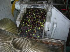 Aceite de oliva casero