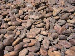 granos de cacao
