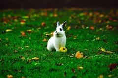Conejo con manzana