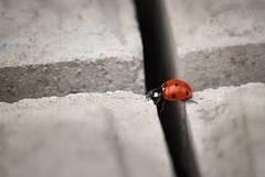 Saltar obstáculos