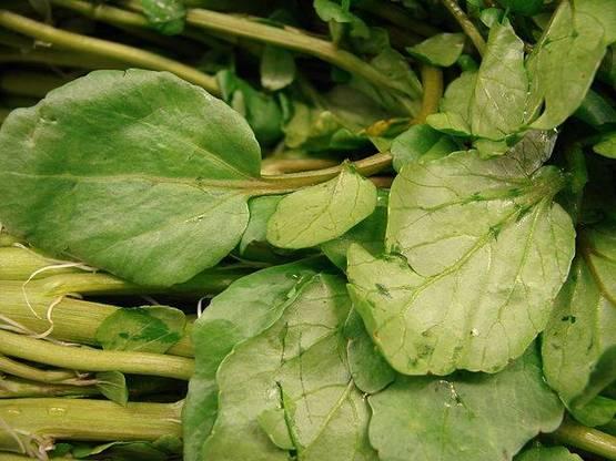 planta de berro