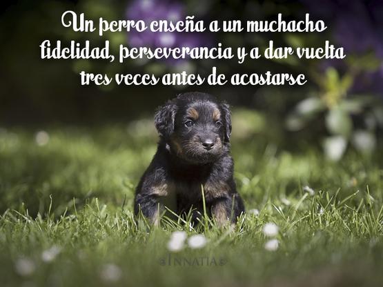 Frases de perros frases sobre los perros - Cuando se puede banar a un cachorro ...