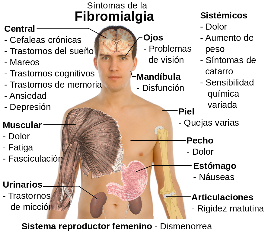 acido urico insulina calmar dolor por acido urico cerveza sin alcohol y acido urico