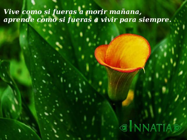 Imágenes De Flores Con Frases Bonitas De Amor De Reflexión