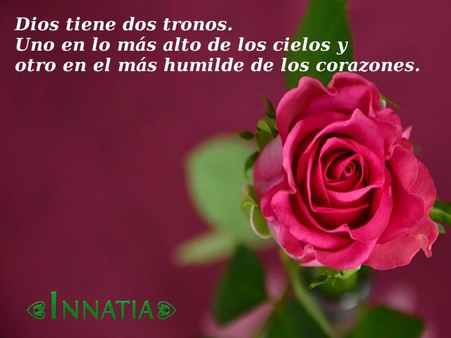 Imagenes De Flores Con Frases Bonitas De Amor De Reflexion Y Mas