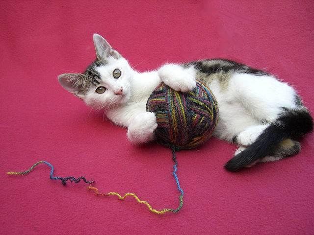 Los Mejores Remedios Caseros Para Eliminar Las Pulgas De Los Gatos
