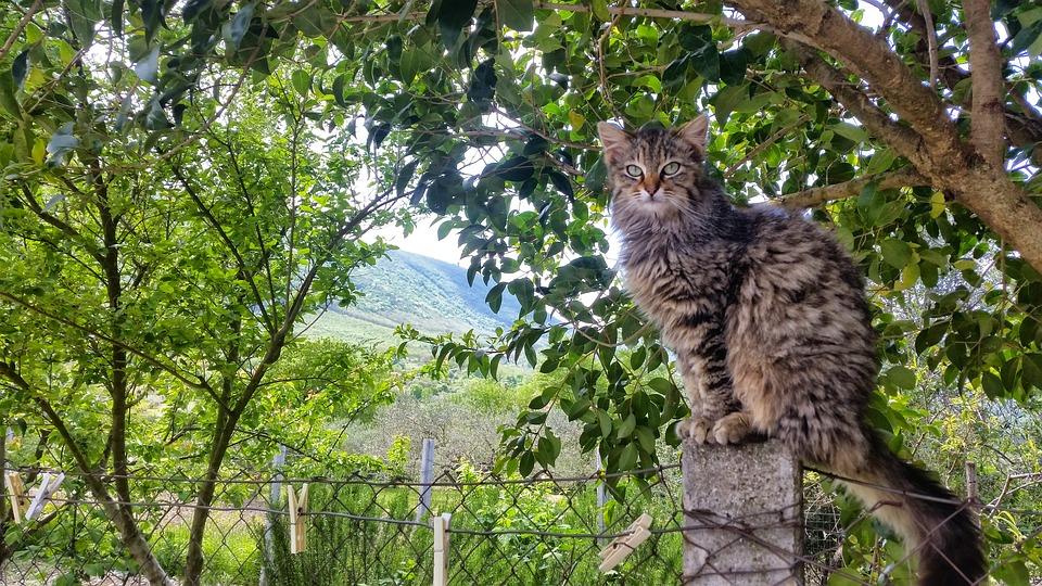 Las 5 mejores recetas de comida casera para gatos - Innatia.com