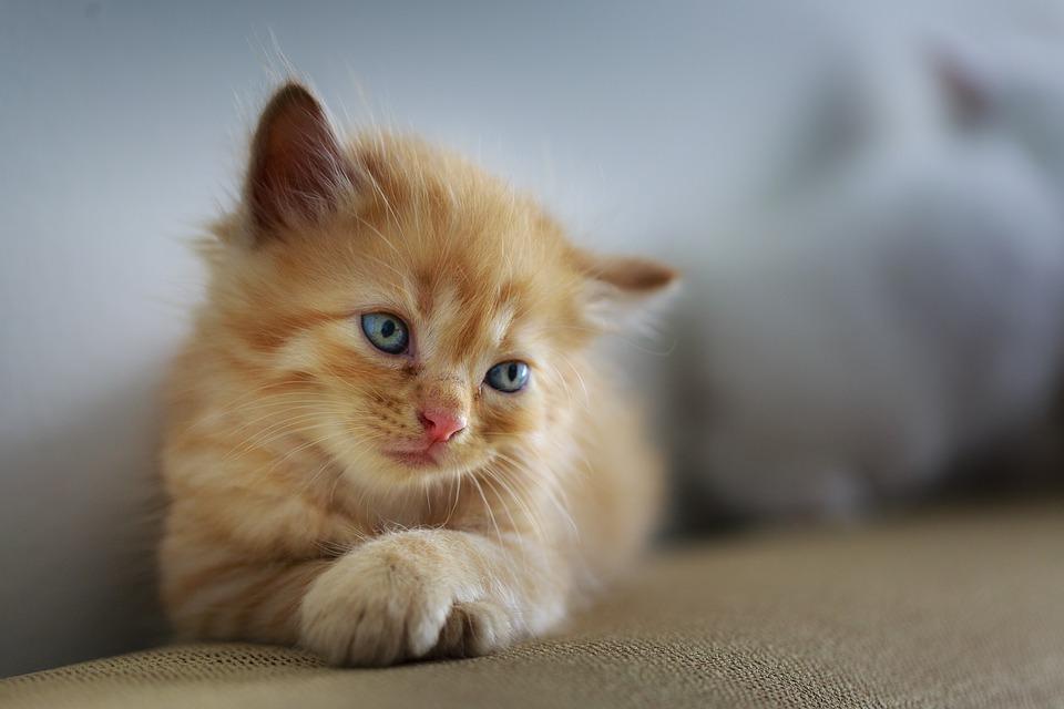 Imágenes De Animales Con Frases Graciosas Tiernas De Amor