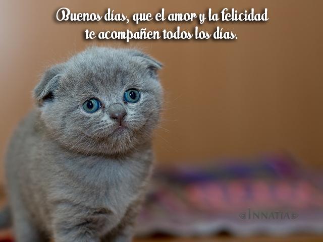 Imágenes De Gatos Con Frases De Amor Chistosas Tiernas Y