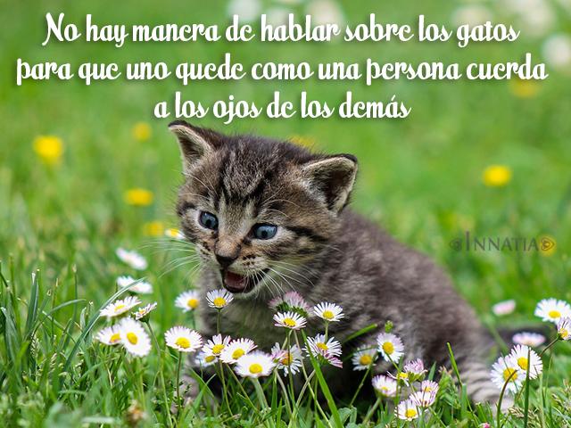 Imágenes De Gatos Con Frases De Amor Chistosas Tiernas Y Más