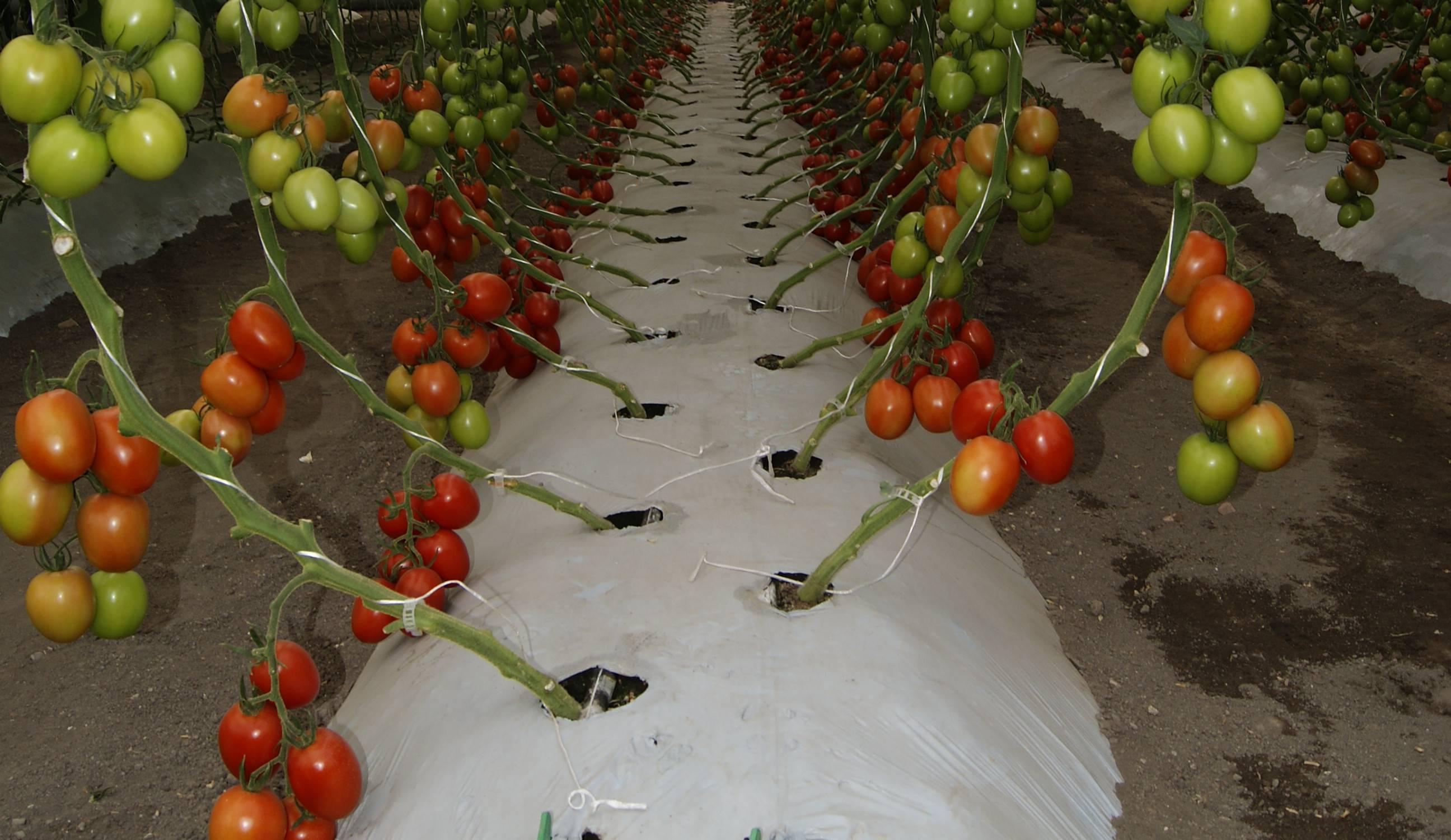 Qu es el cultivo hidrop nico y para qu sirve por itzel for Que es la asociacion de cultivos