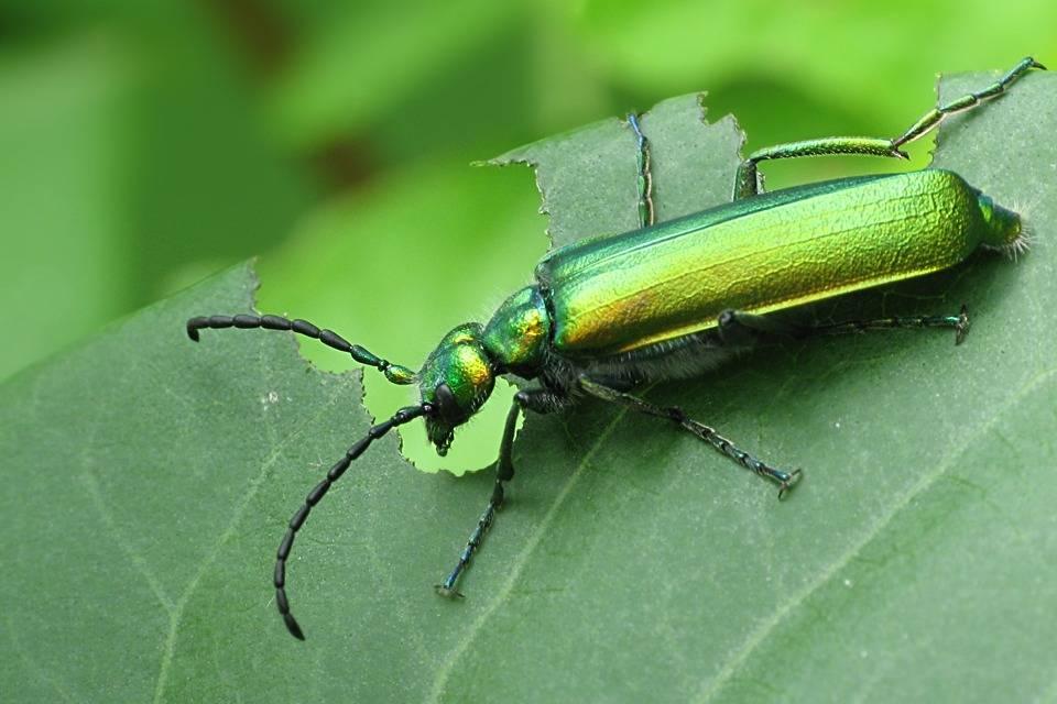 Trucos caseros para ahuyentar los insectos de las plantas for Insectos del jardin