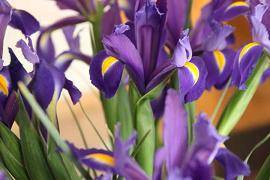 Los mejores consejos para decorar el jard n con feng shui for Jardines pequenos segun el feng shui
