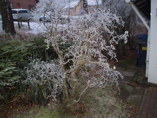 4 consejos para cuidar el jard n del fr o mant n tu - Plantas exterior todo el ano ...