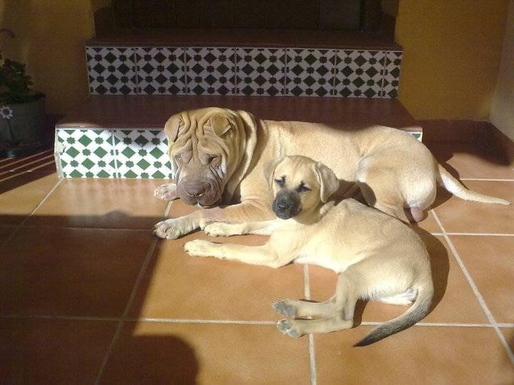 C mo tratar la intoxicaci n en perros por plantas - Jardin para perros ...