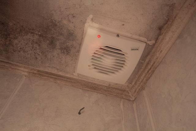 C mo quitar el moho de la ducha 3 trucos para limpiar - Limpiar moho bano ...