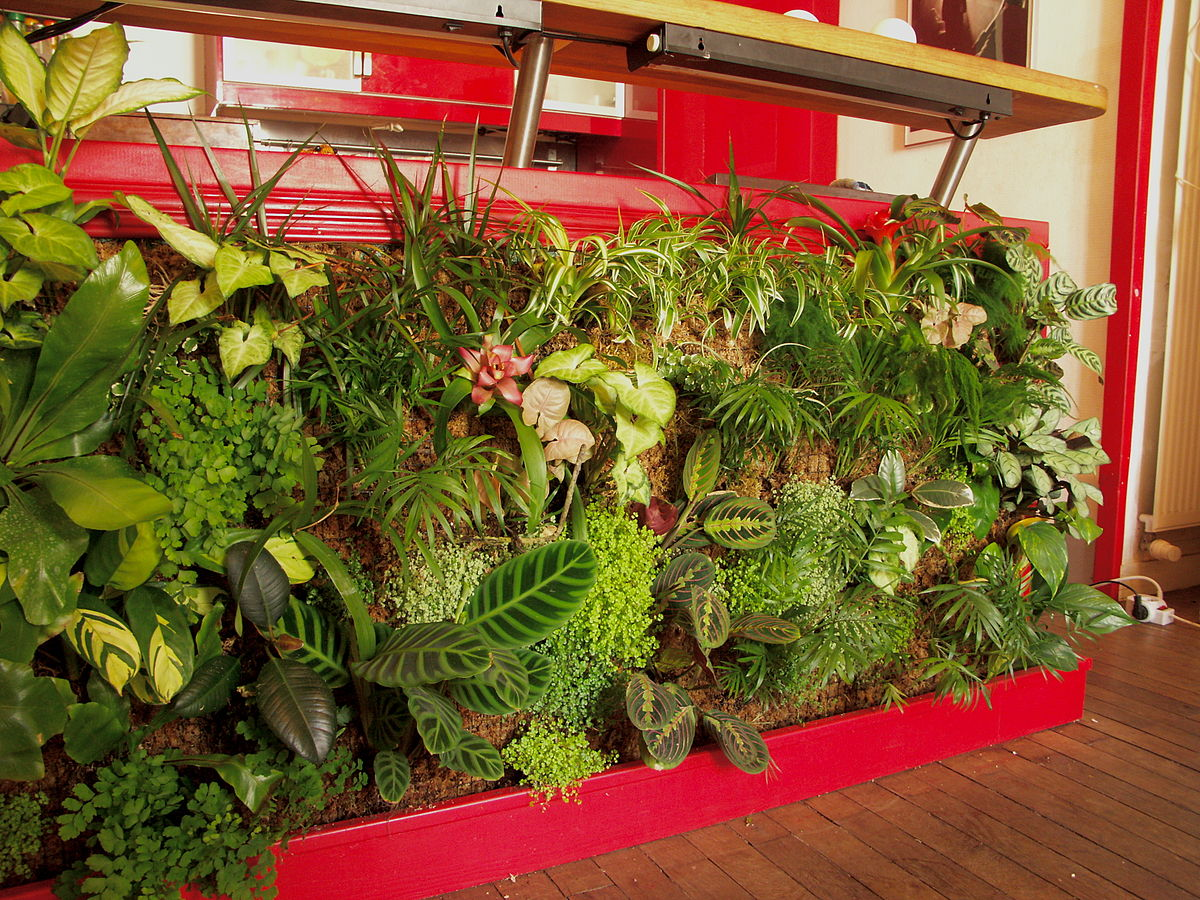 C mo hacer un muro verde en el interior de la casa for Plantas para muros verdes verticales