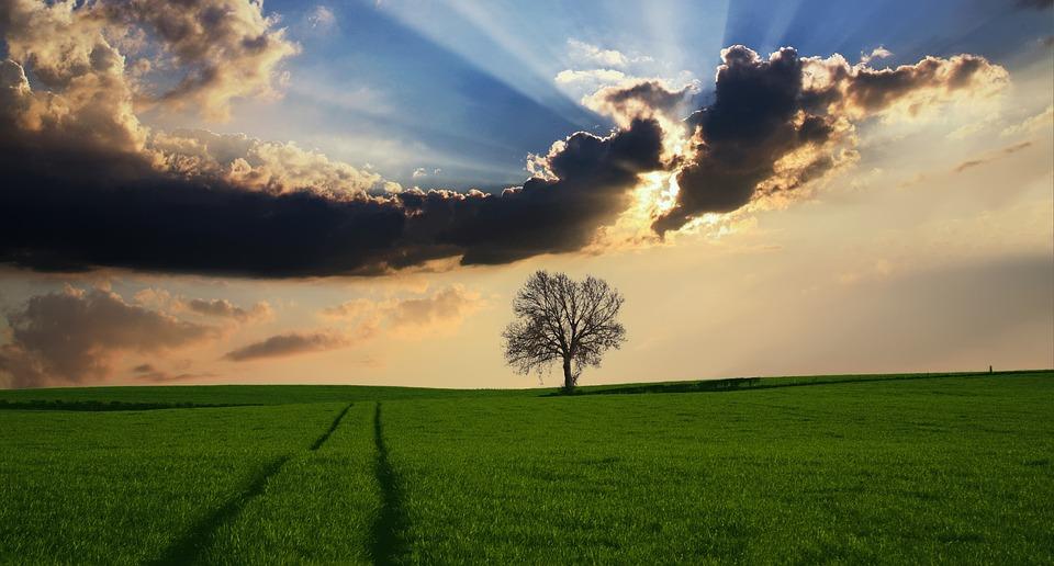 Frases De La Naturaleza Cortas Reflexiones Poemas