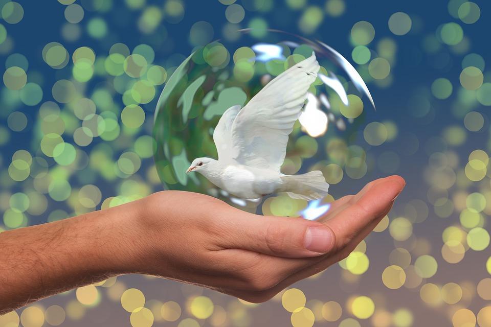 Frases Para El Dia De La Paz Para Celebrar La No Violencia
