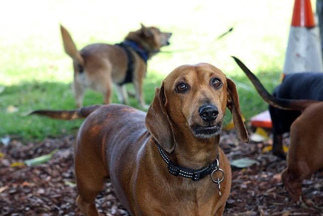 Siete remedios caseros para evitar que los perros orinen for Puerta para perros