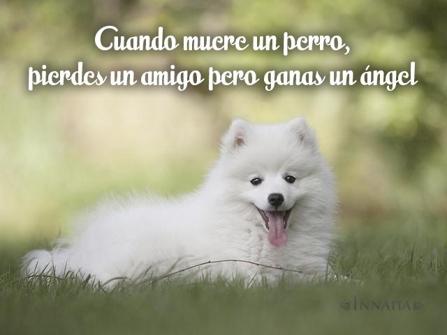Frases De Perros Frases Sobre Los Perros