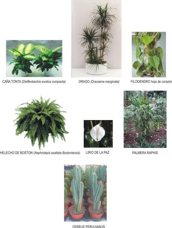 plantas para limpiar el aire