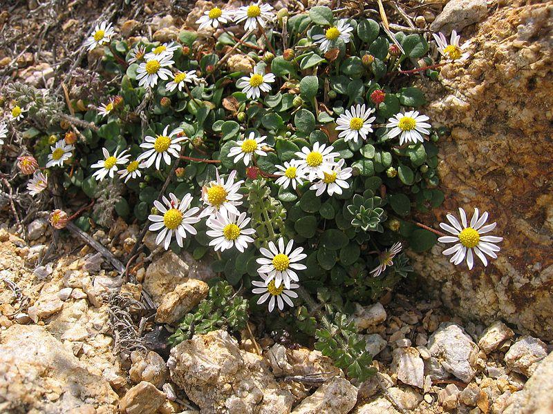 Qué plantas son de sol? - Innatia.com