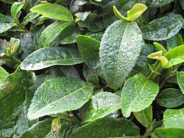 combatir el acido urico con bicarbonato como se trata el acido urico metabolismo de purinas acido urico