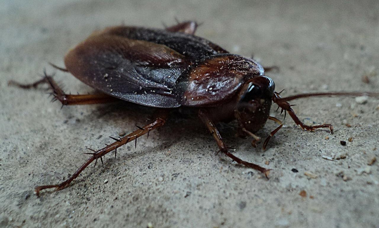El problema: las cucarachas son duras